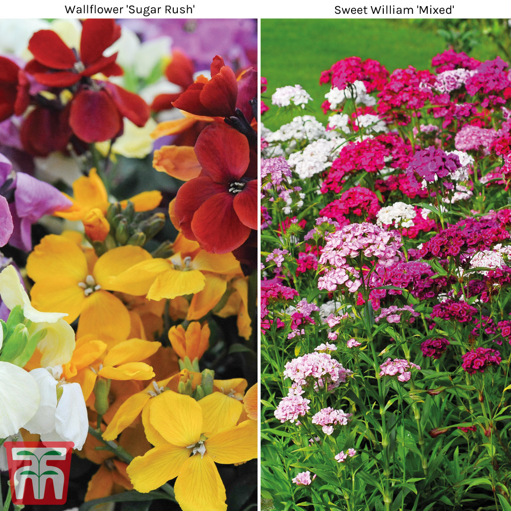 Image of Garden Ready Scented Duo Collection