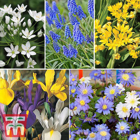 Image of 100 Spring Flowering Bulb Collection