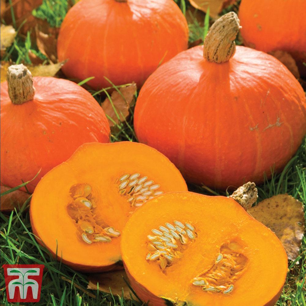 Image of Squash 'Kabocha' (Japanese Pumpkin)