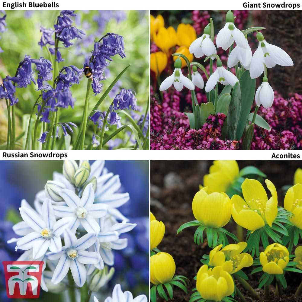Image of Woodland Garden Saver Collection