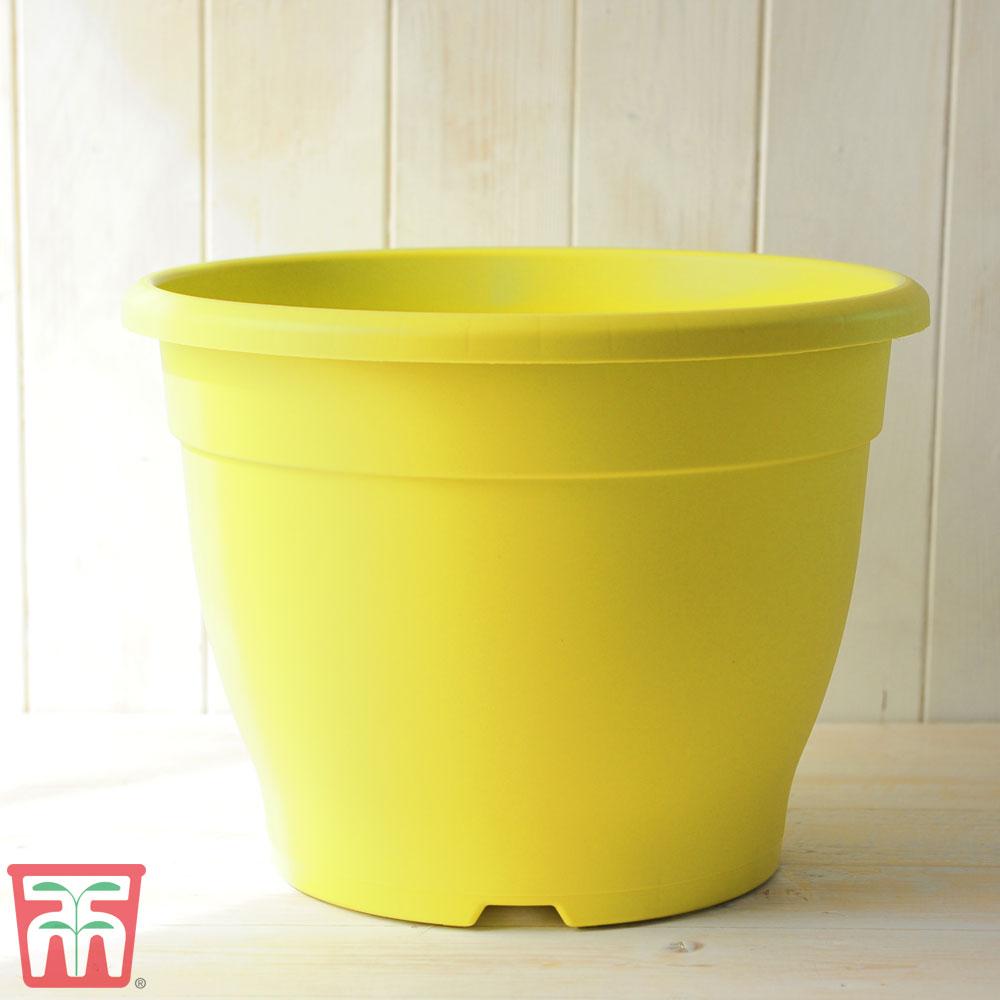 Image of Bella Yellow Pot
