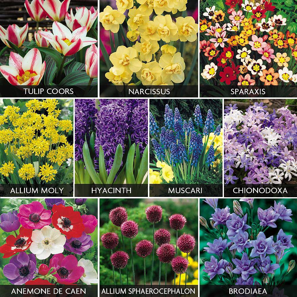 Image of 505 Bulb Collection