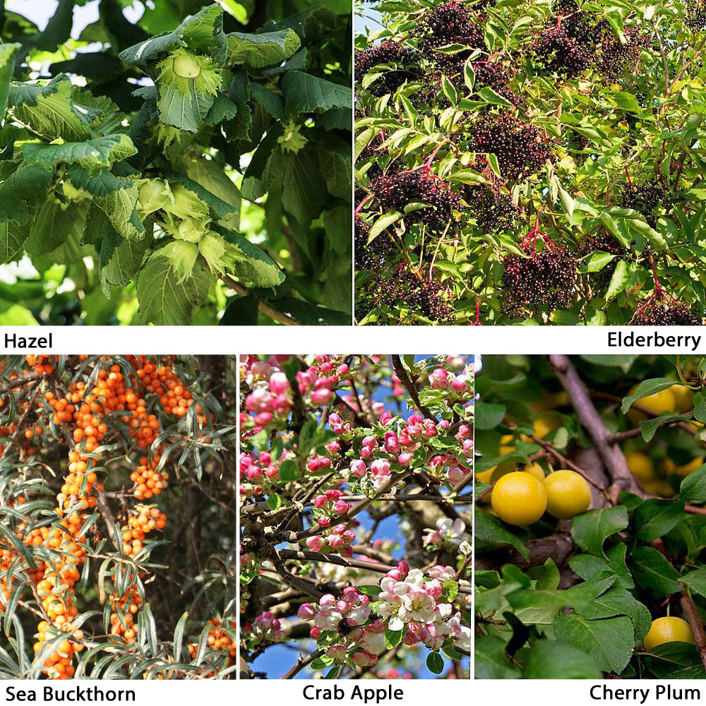 Image of Edible Hedging Collection