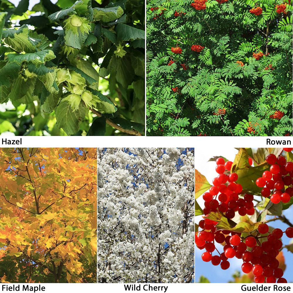 Image of Autumn Shades Hedging Collection
