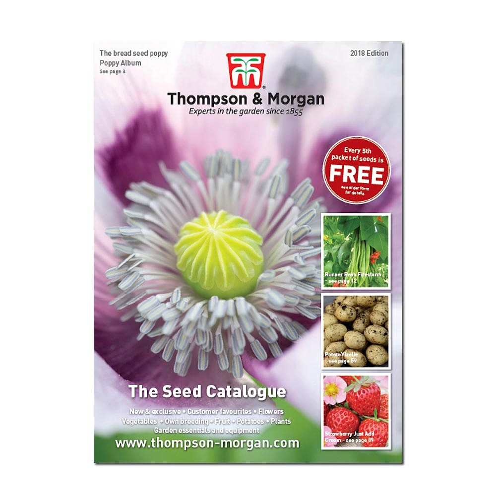 thompson morgan seed catalogue thompson morgan. Black Bedroom Furniture Sets. Home Design Ideas