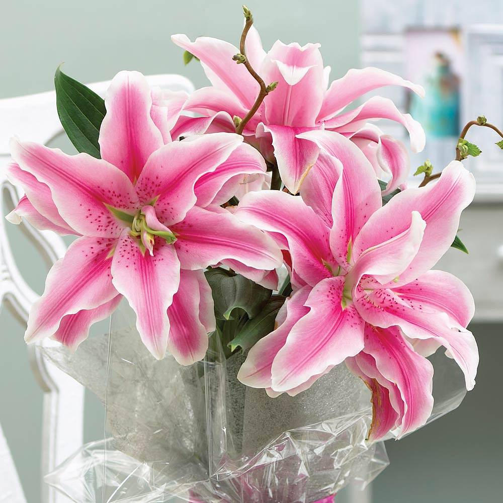 Lily bulbs thompson morgan lily china girl dhlflorist Choice Image