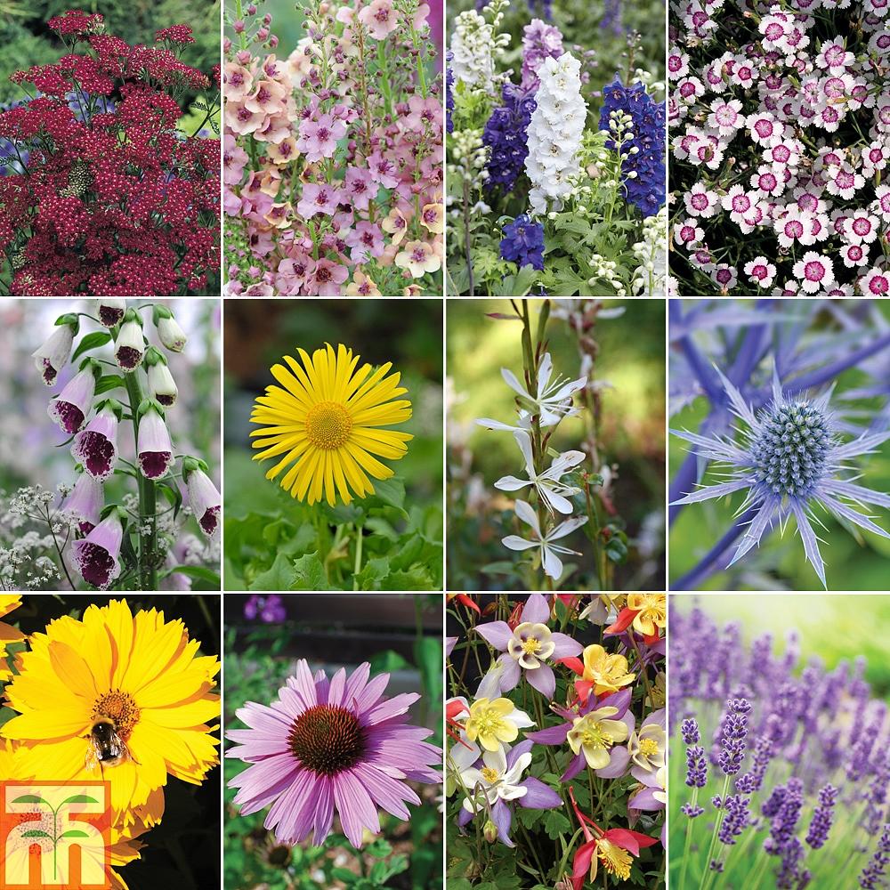 perennial cottage garden collection thompson   morgan