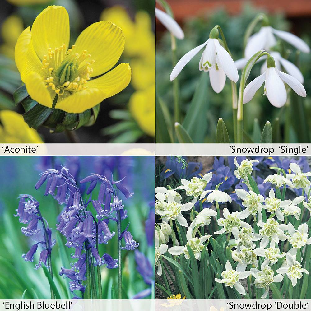 Stock photo a cluster of blue bell like flowers in a summer garden - Spring Bulbs In The Green Collection