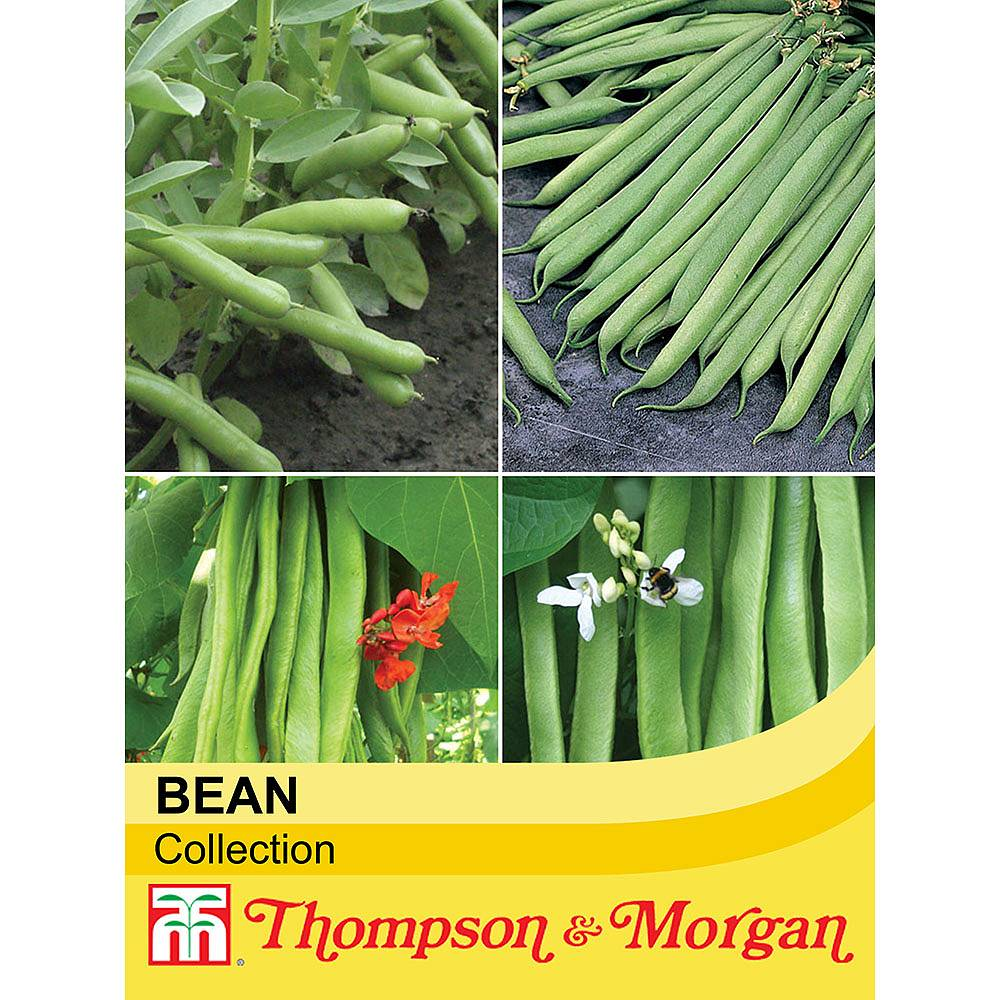 top bean collection seeds thompson morgan. Black Bedroom Furniture Sets. Home Design Ideas