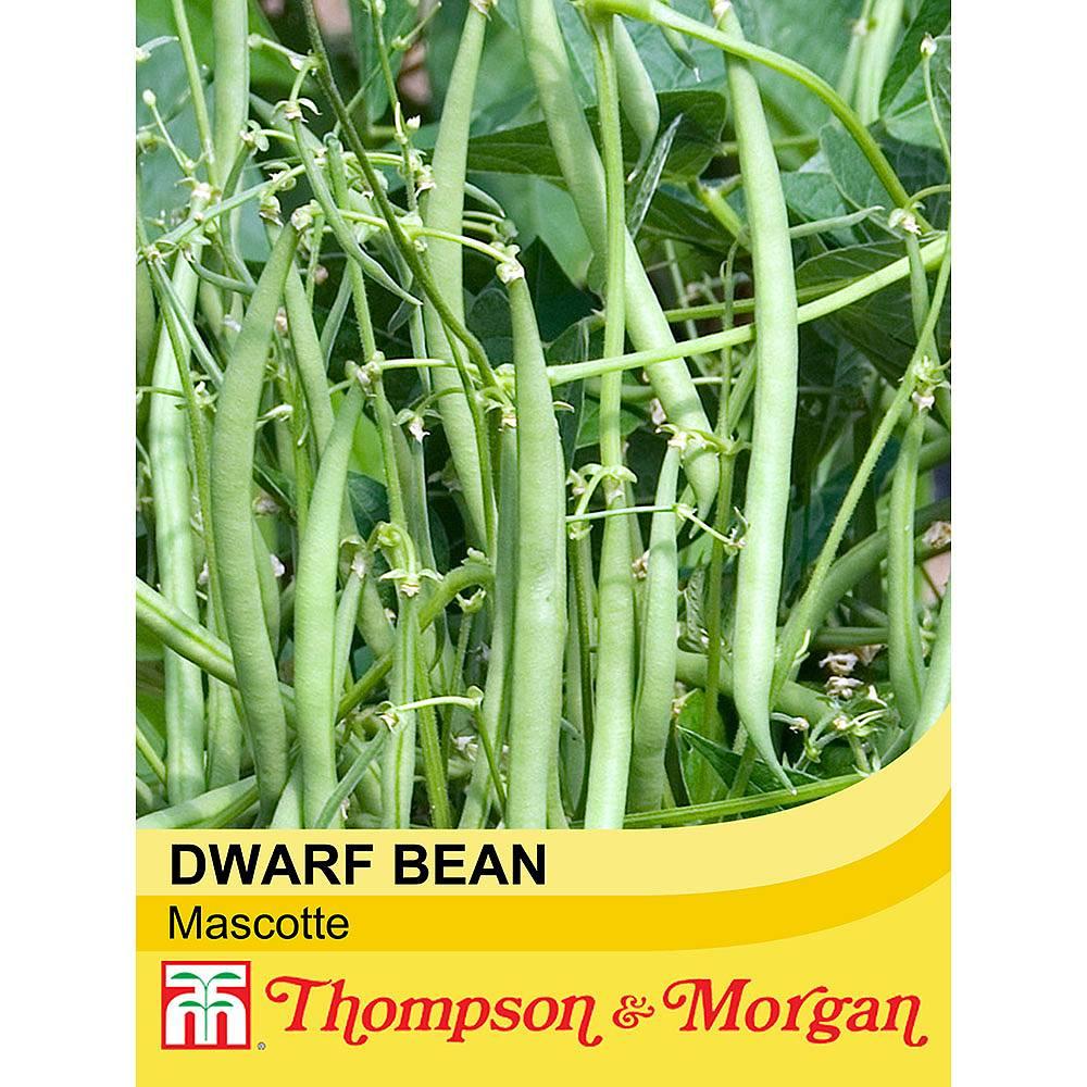 dwarf bean 39 mascotte 39 seeds thompson morgan. Black Bedroom Furniture Sets. Home Design Ideas