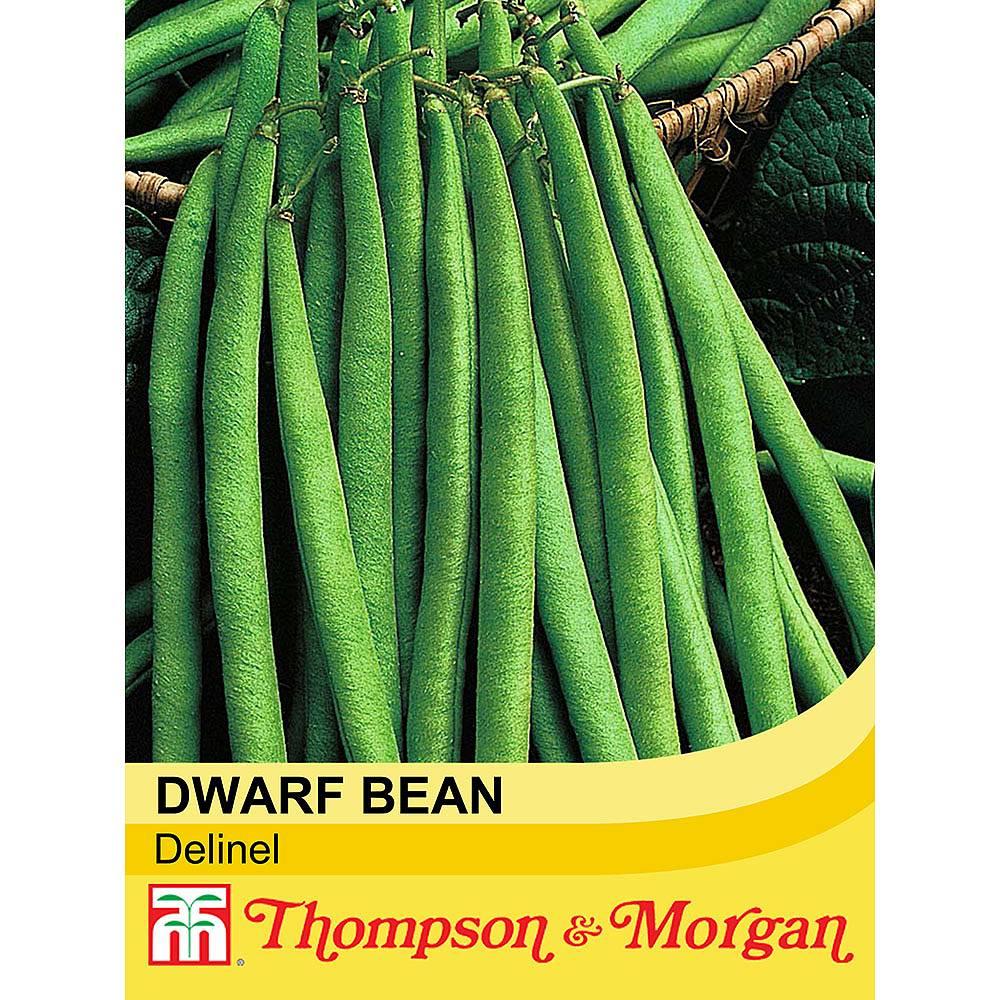 dwarf bean 39 delinel 39 seeds thompson morgan. Black Bedroom Furniture Sets. Home Design Ideas