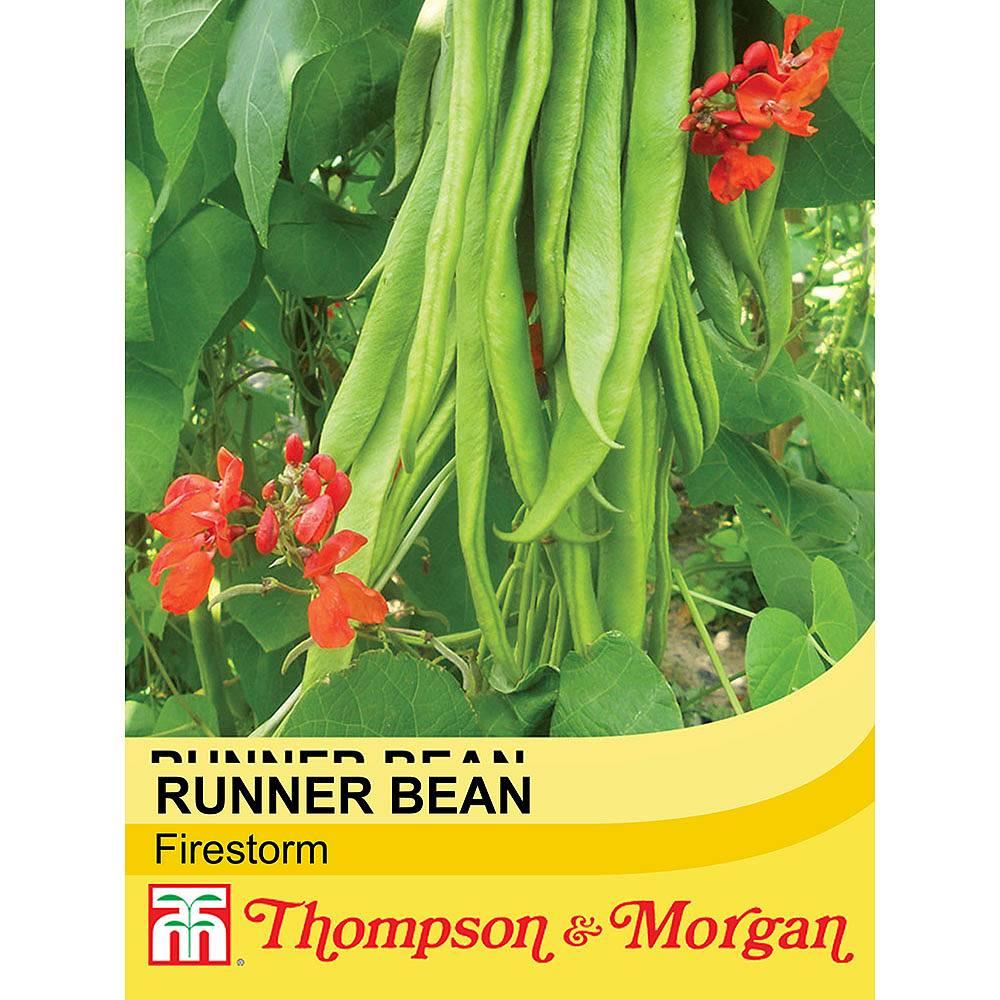 runner bean 39 firestorm 39 seeds thompson morgan. Black Bedroom Furniture Sets. Home Design Ideas