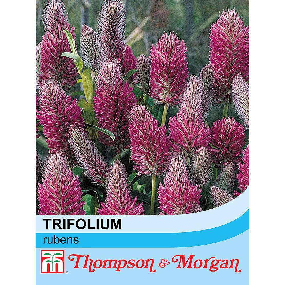 trifolium rubens seeds thompson morgan. Black Bedroom Furniture Sets. Home Design Ideas
