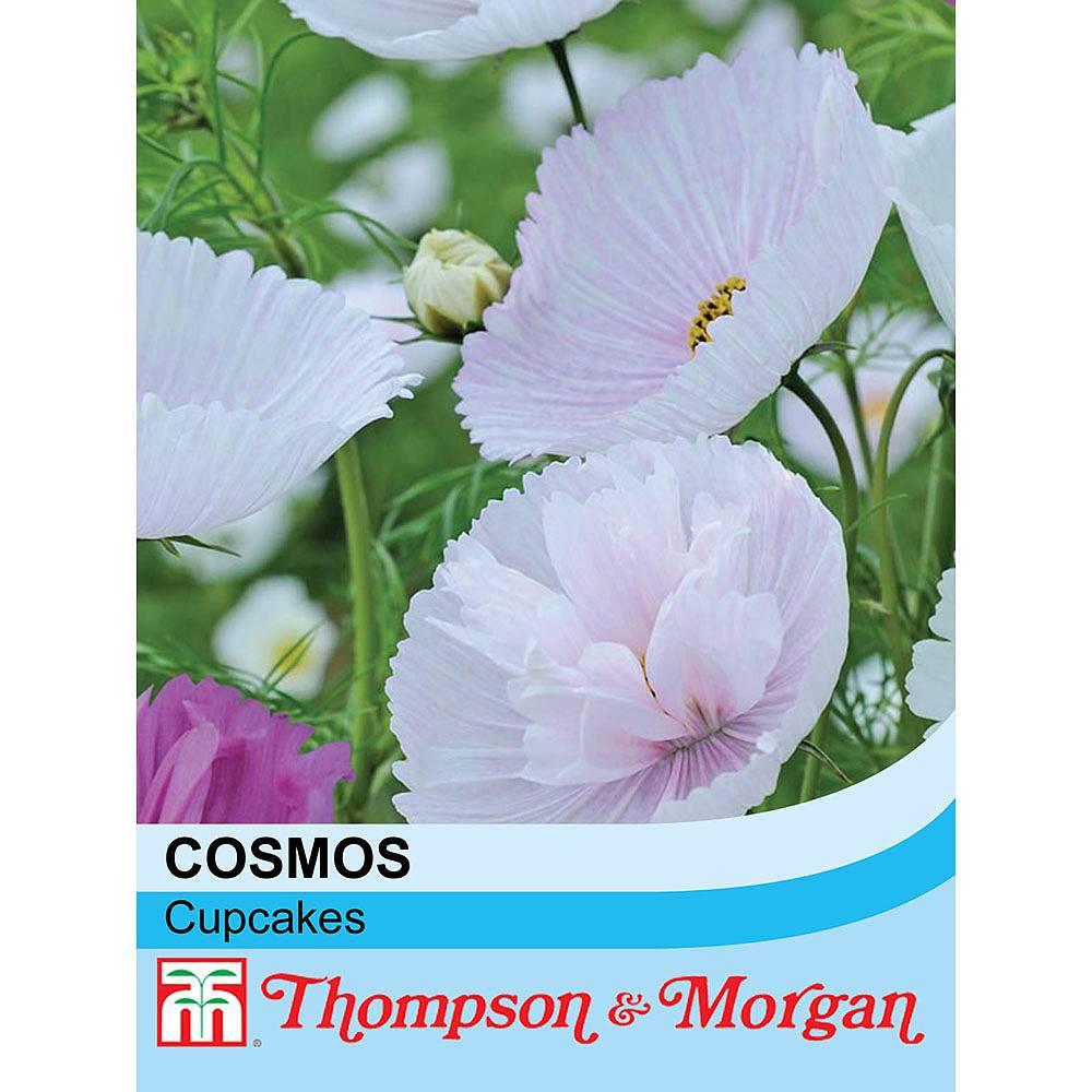 Cosmos Bipinnatus Cupcakes Seeds