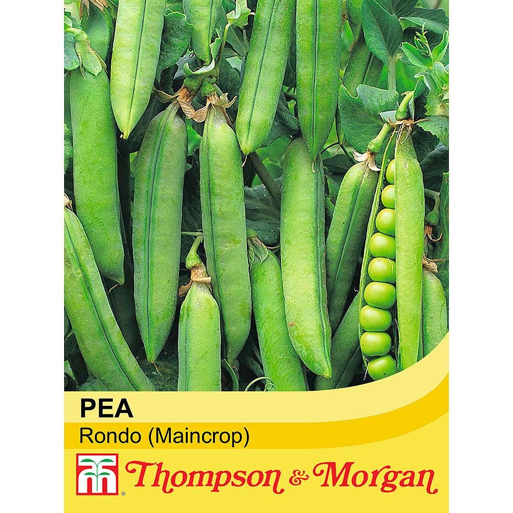 pea 39 rondo 39 maincrop seeds thompson morgan. Black Bedroom Furniture Sets. Home Design Ideas
