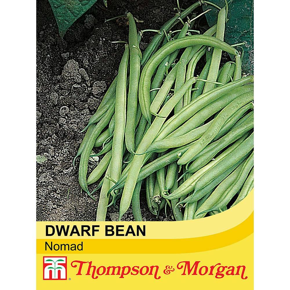dwarf bean 39 nomad 39 seeds thompson morgan. Black Bedroom Furniture Sets. Home Design Ideas