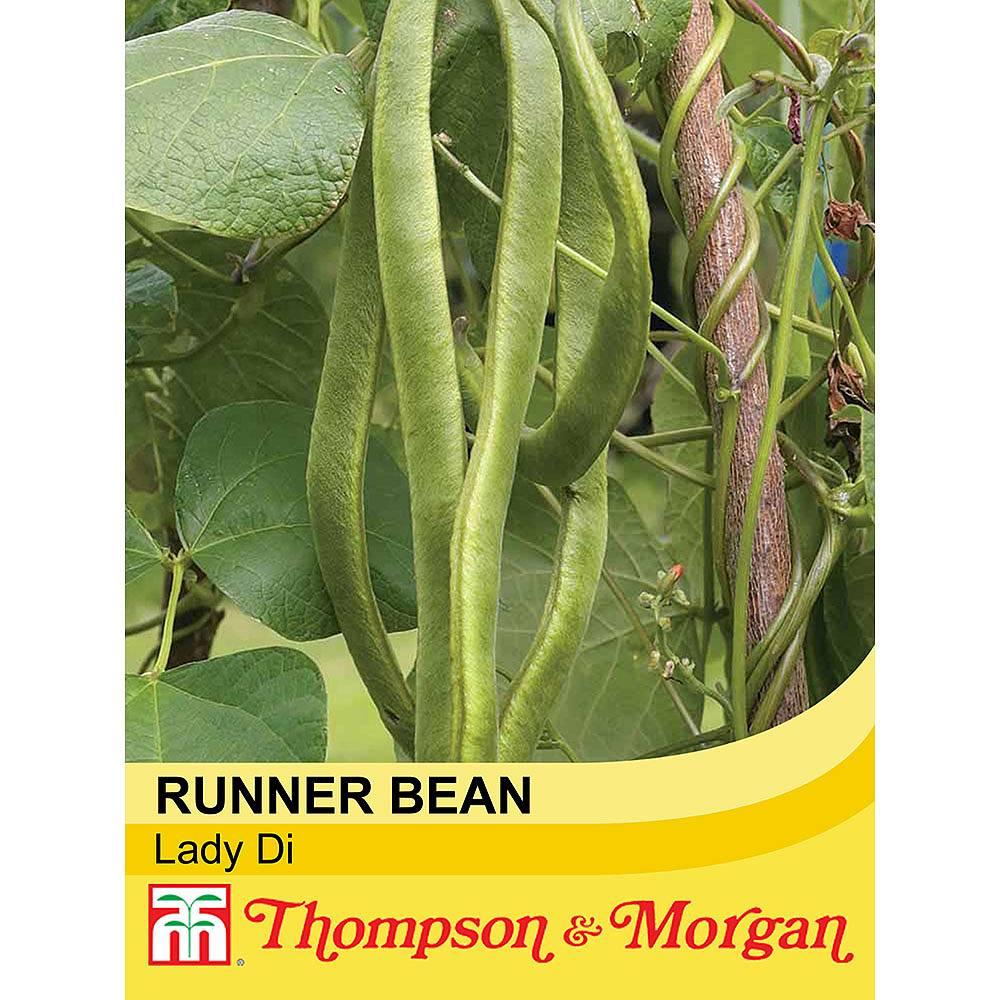 runner bean 39 lady di 39 seeds thompson morgan. Black Bedroom Furniture Sets. Home Design Ideas