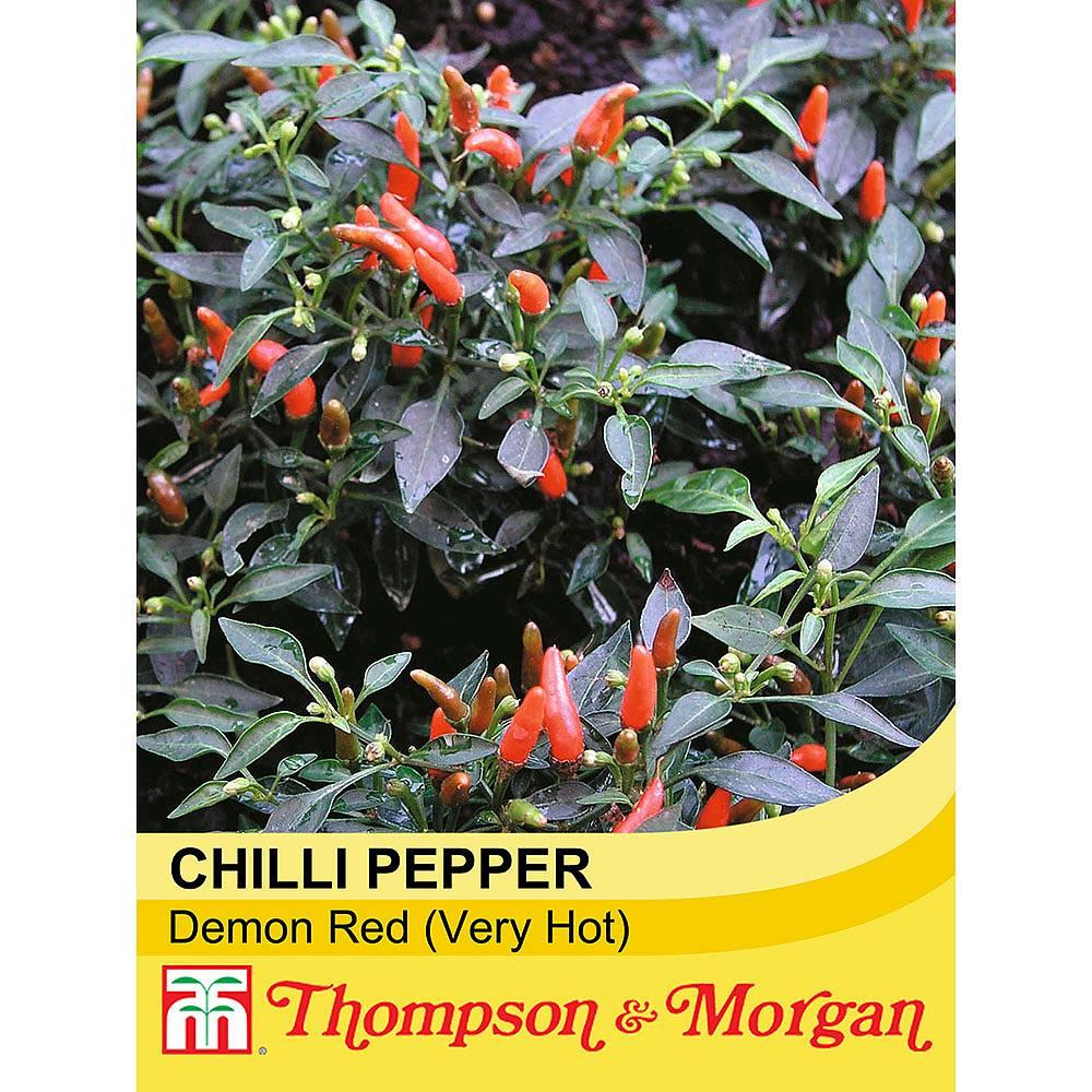 Chilli Pepper 'Demon Red' (Very Hot)Capsicum annuumChili Pepper