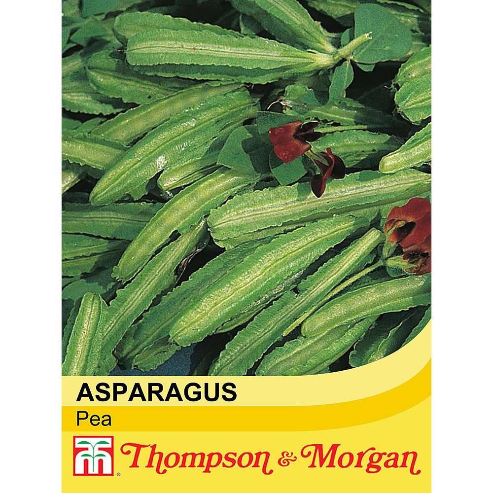 asparagus pea seeds thompson morgan. Black Bedroom Furniture Sets. Home Design Ideas