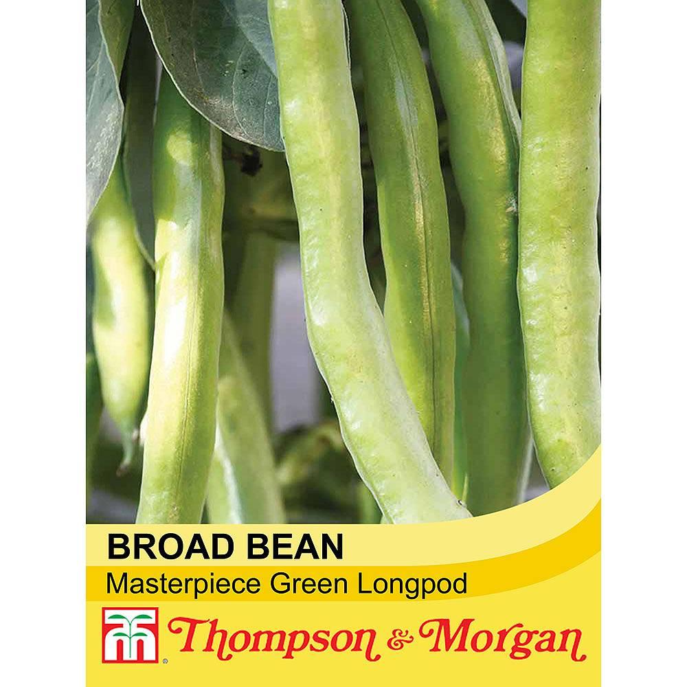 broad bean 39 masterpiece green longpod 39 seeds thompson. Black Bedroom Furniture Sets. Home Design Ideas