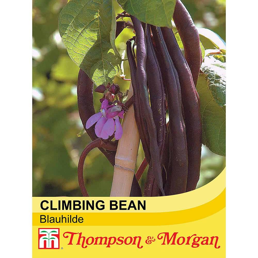 climbing bean 39 blauhilde 39 seeds thompson morgan. Black Bedroom Furniture Sets. Home Design Ideas