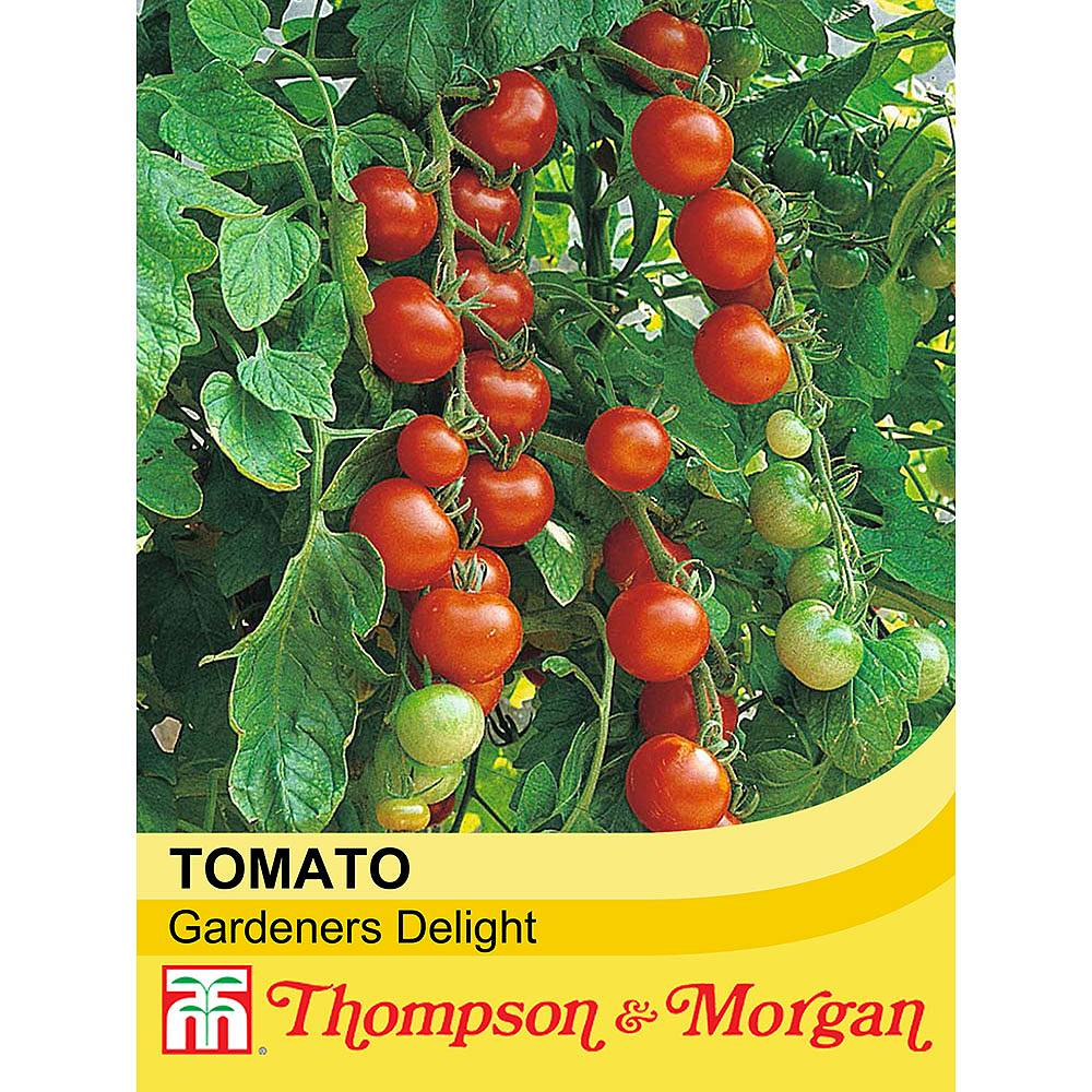 tomato 39 gardener 39 s delight 39 seeds thompson morgan. Black Bedroom Furniture Sets. Home Design Ideas