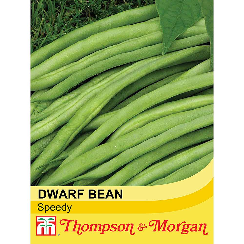 dwarf bean 39 speedy 39 seeds thompson morgan. Black Bedroom Furniture Sets. Home Design Ideas