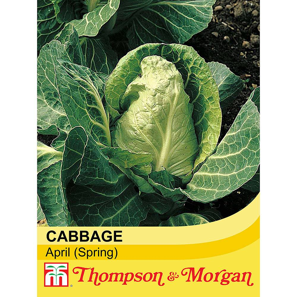 When sow cabbage 75