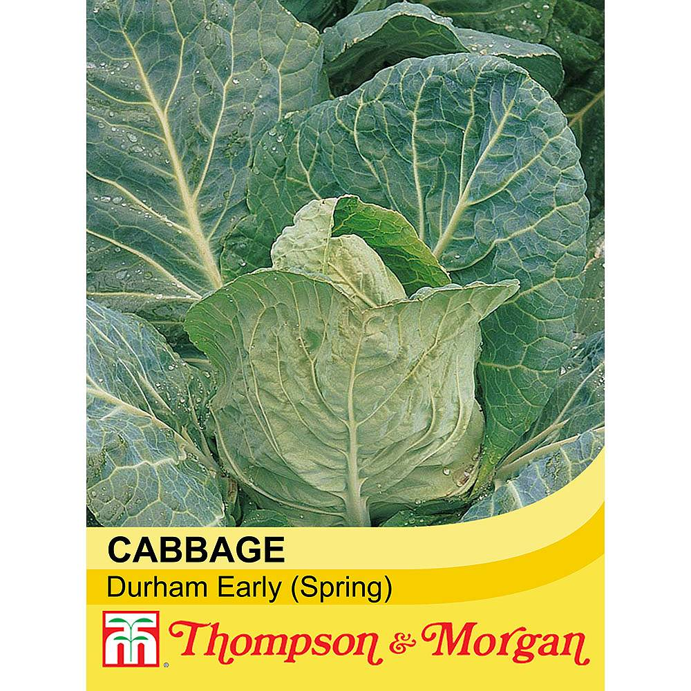 When sow cabbage 8