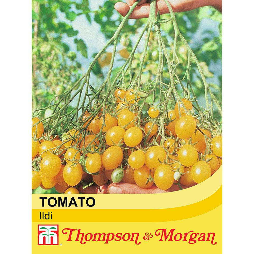 tomato 39 ildi 39 seeds thompson morgan. Black Bedroom Furniture Sets. Home Design Ideas