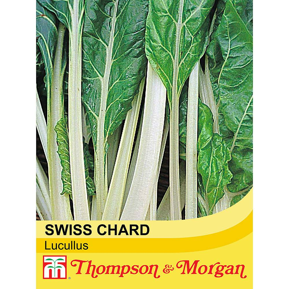 swiss chard 39 lucullus 39 seeds thompson morgan. Black Bedroom Furniture Sets. Home Design Ideas