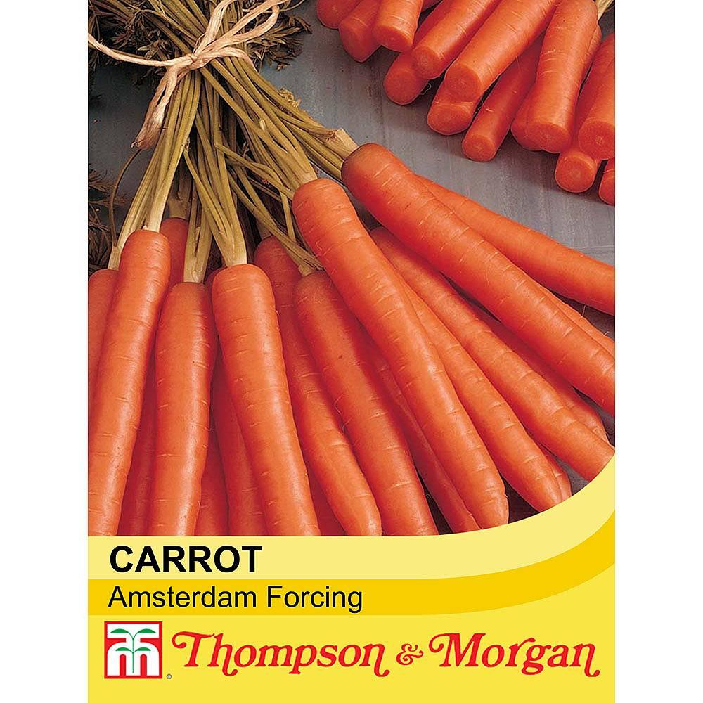 carrot 39 amsterdam forcing 39 seeds thompson morgan. Black Bedroom Furniture Sets. Home Design Ideas