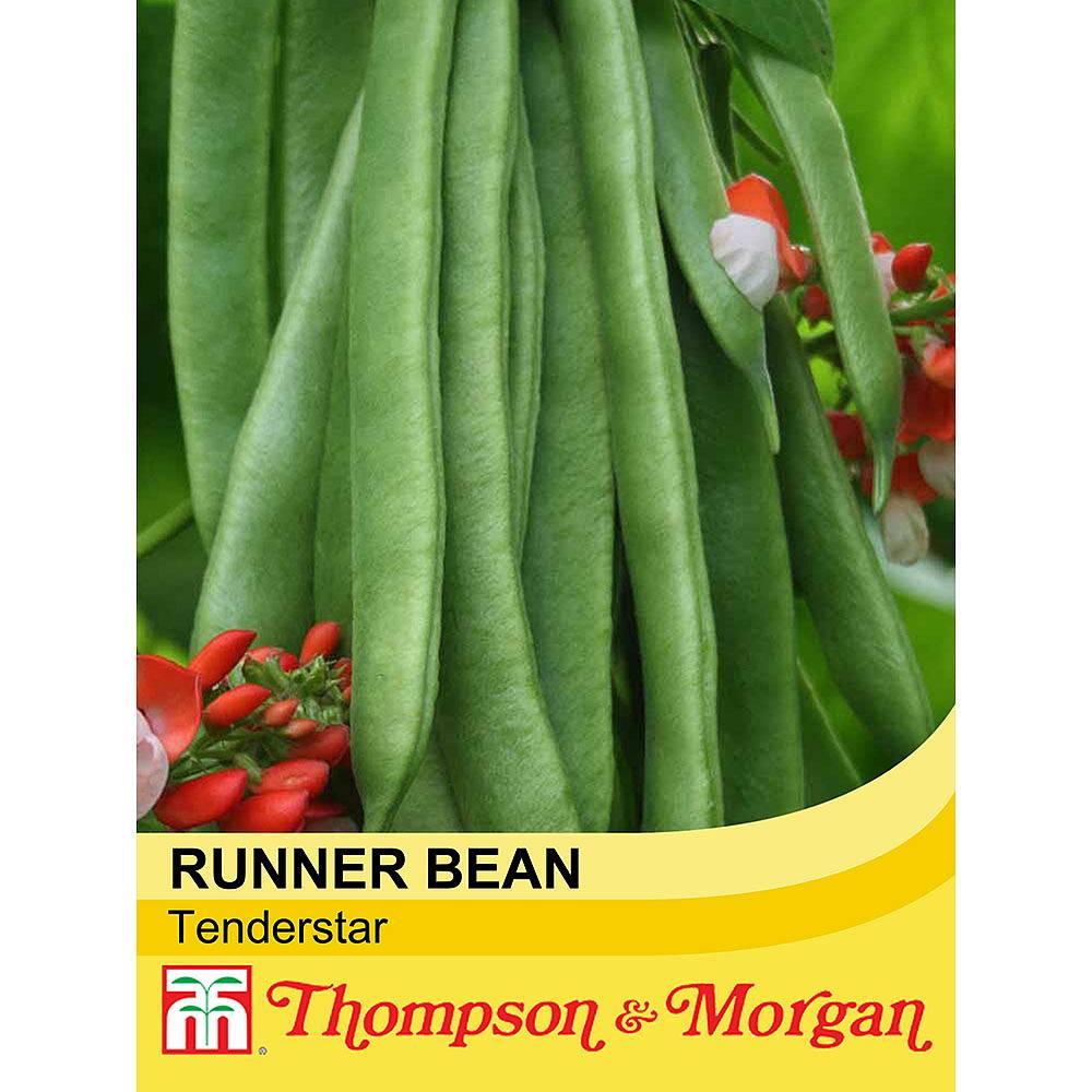 runner bean 39 tenderstar 39 seeds thompson morgan. Black Bedroom Furniture Sets. Home Design Ideas