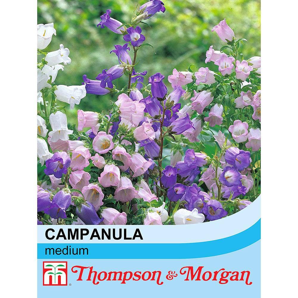 Campanula Medium Mixed Seeds Thompson Morgan