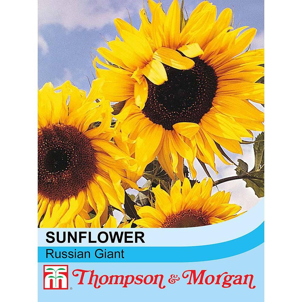 sunflower 39 russian giant 39 seeds thompson morgan. Black Bedroom Furniture Sets. Home Design Ideas