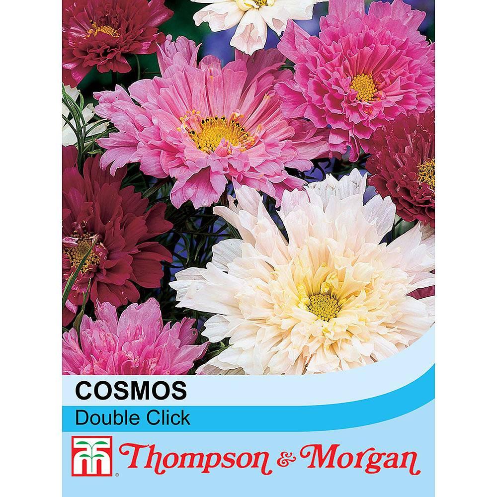 Cosmos bipinnatus double click seeds thompson morgan next izmirmasajfo Image collections