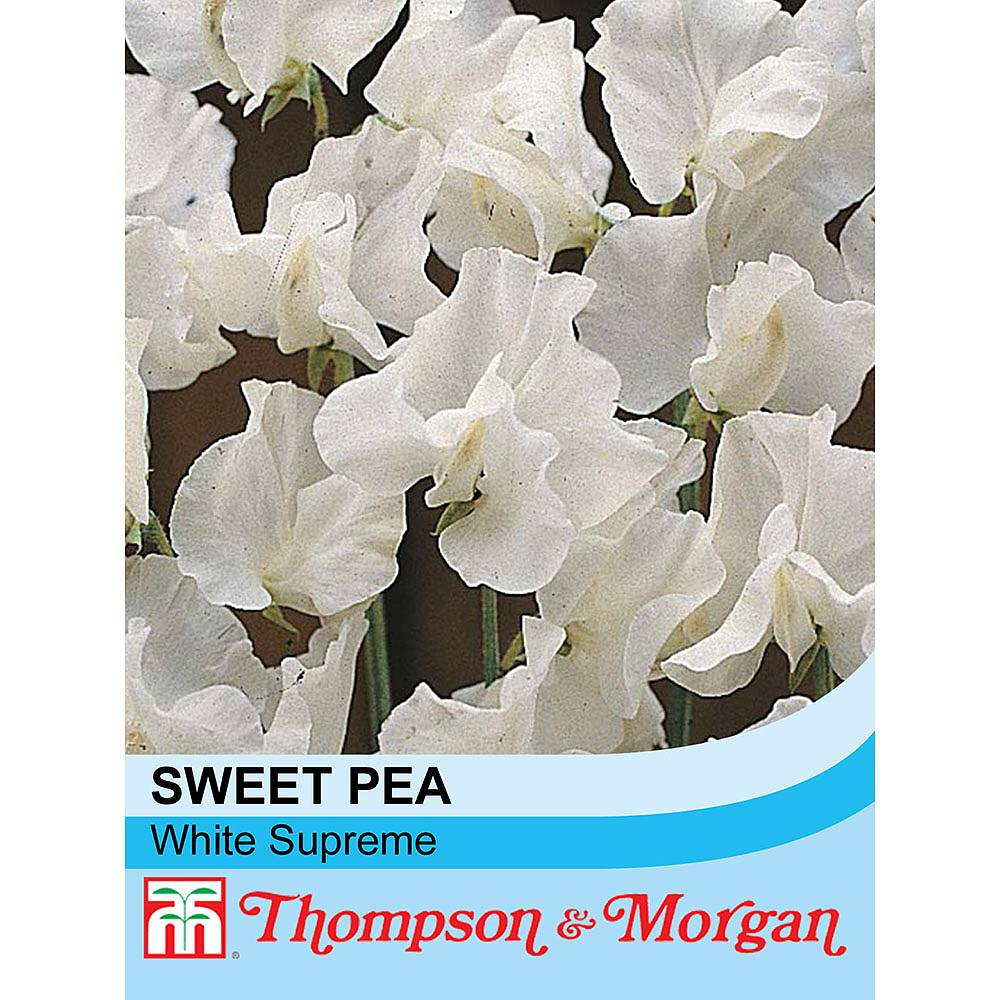 Sweet Pea White Supreme Seeds Thompson Morgan