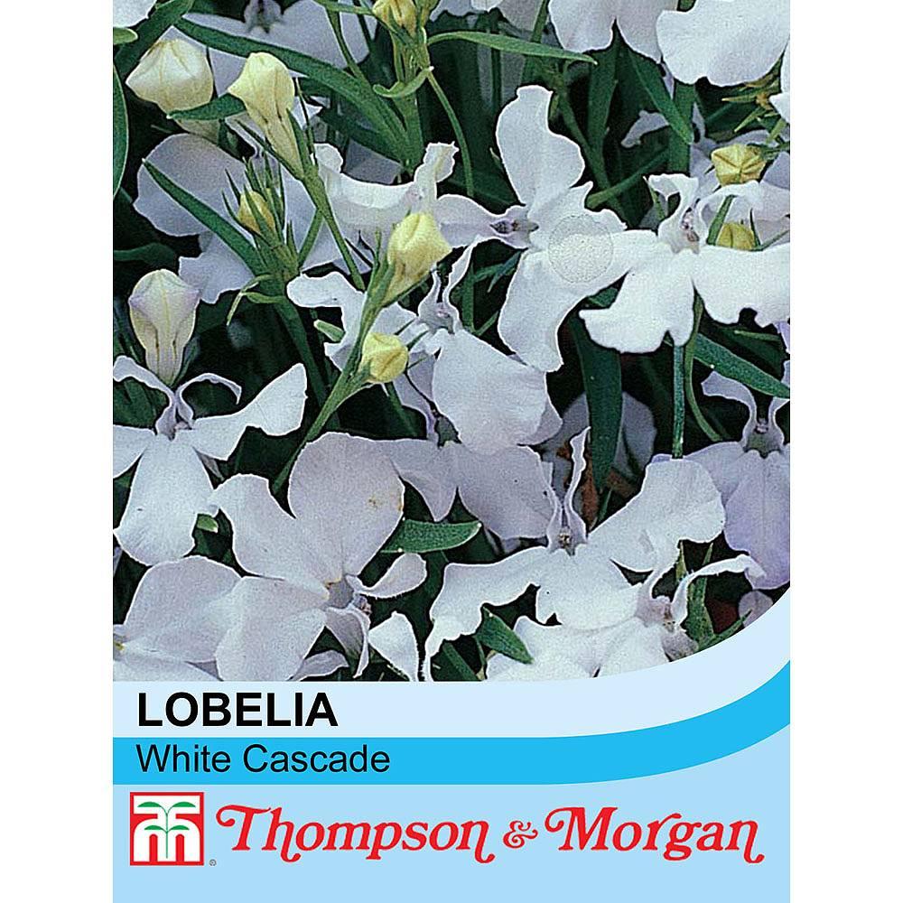 Lobelia Erinus White Cascade Seeds Thompson Morgan