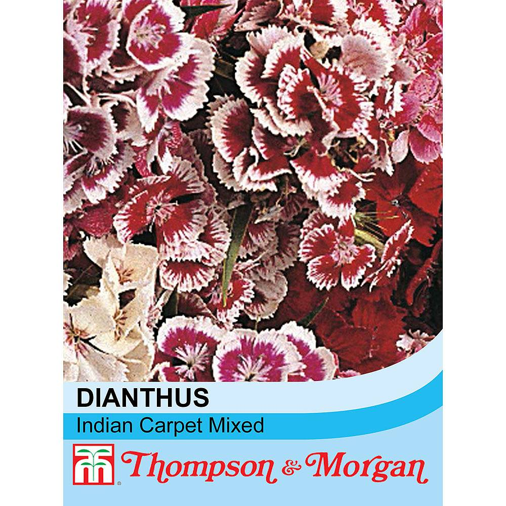 Dianthus Barbatus Indian Carpet Mixed Seeds Thompson