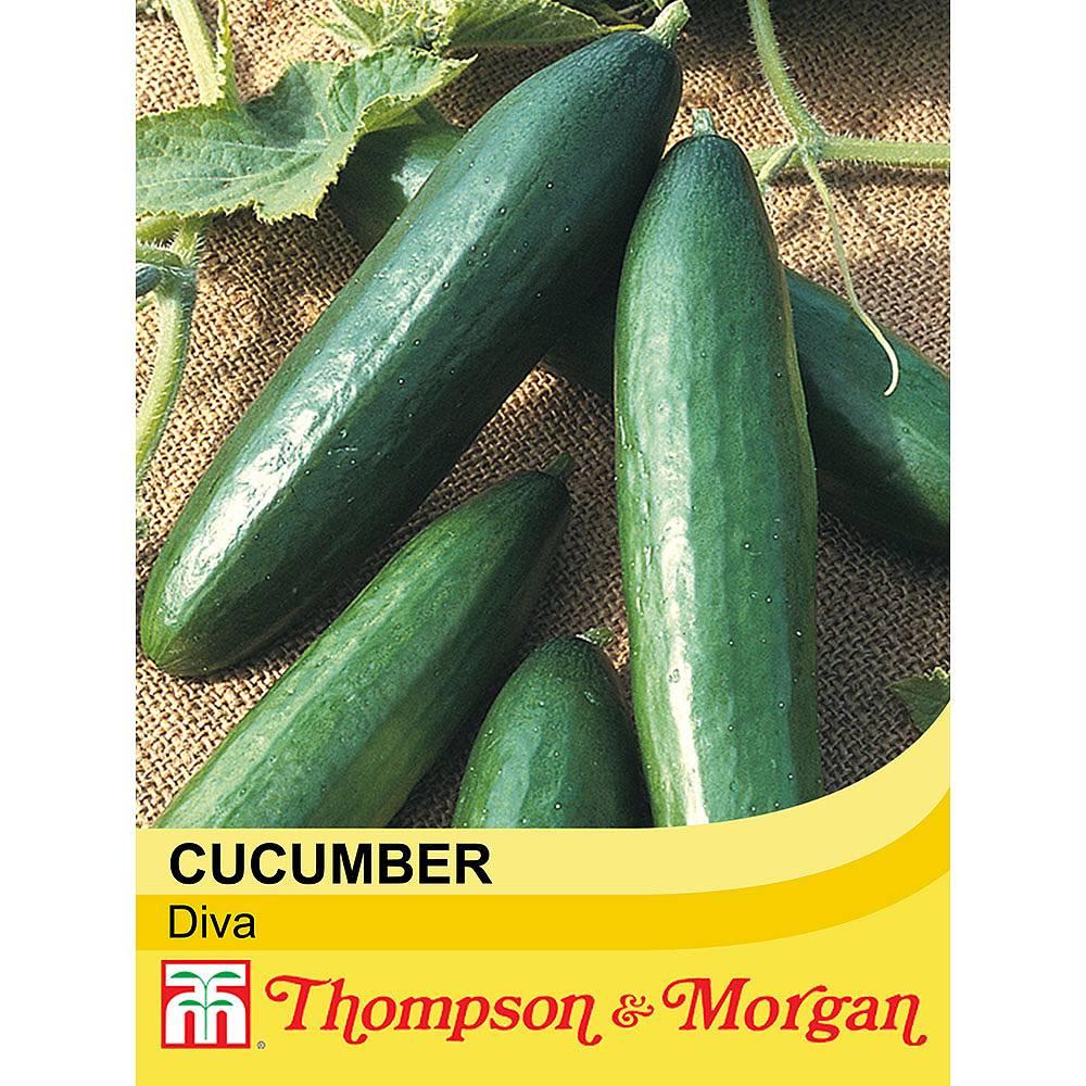 cucumber 39 diva 39 seeds thompson morgan. Black Bedroom Furniture Sets. Home Design Ideas