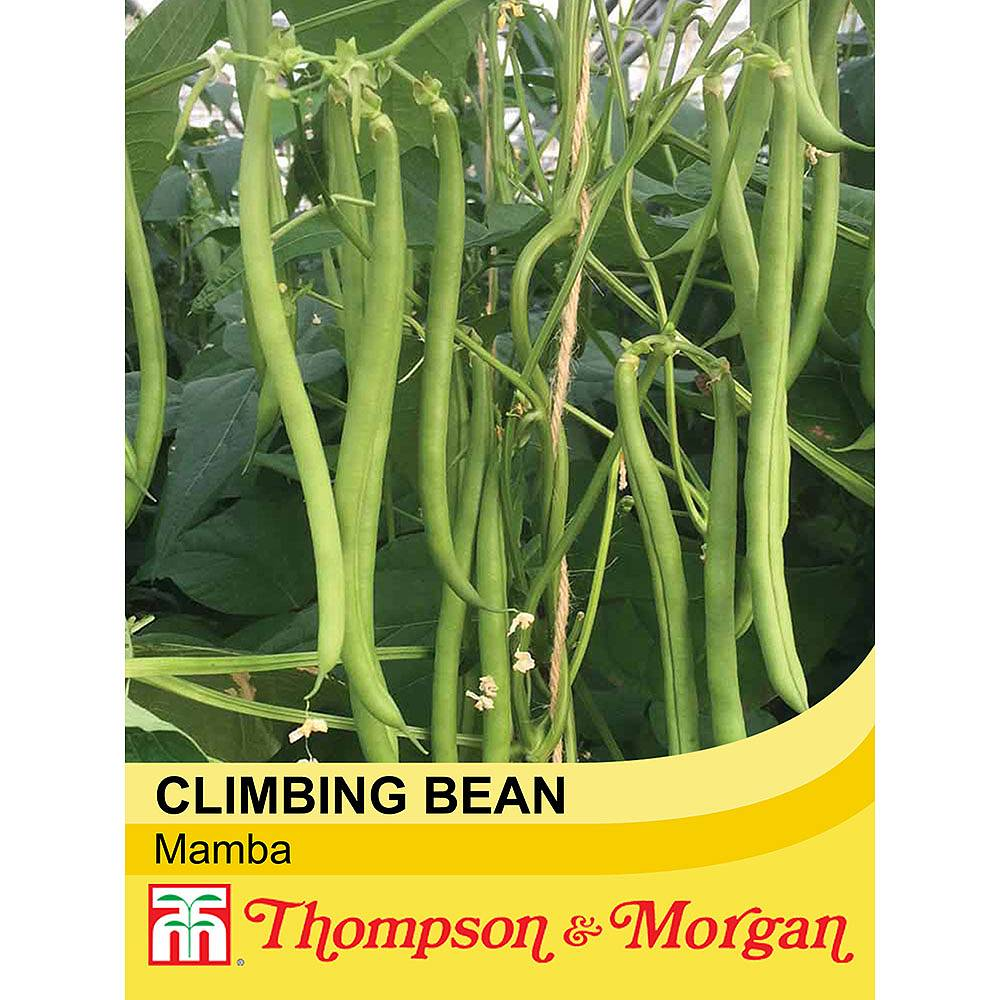 climbing bean 39 mamba 39 seeds thompson morgan. Black Bedroom Furniture Sets. Home Design Ideas