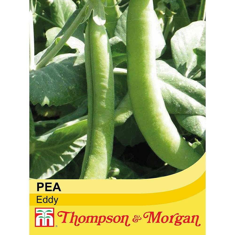 pea 39 eddy 39 seeds thompson morgan. Black Bedroom Furniture Sets. Home Design Ideas