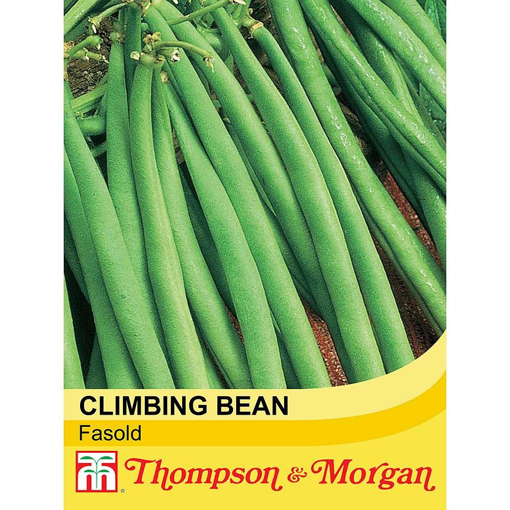 climbing bean 39 fasold 39 seeds thompson morgan. Black Bedroom Furniture Sets. Home Design Ideas
