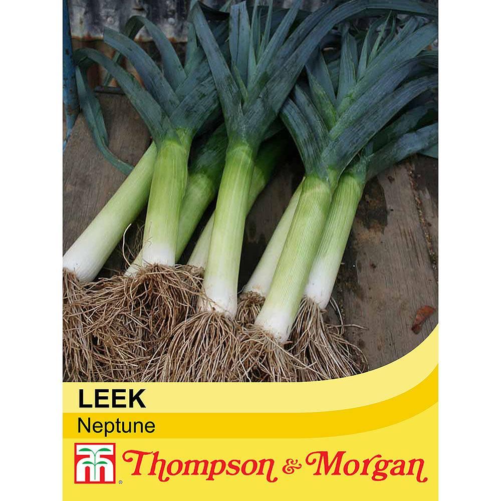 leek 39 neptune 39 seeds thompson morgan. Black Bedroom Furniture Sets. Home Design Ideas