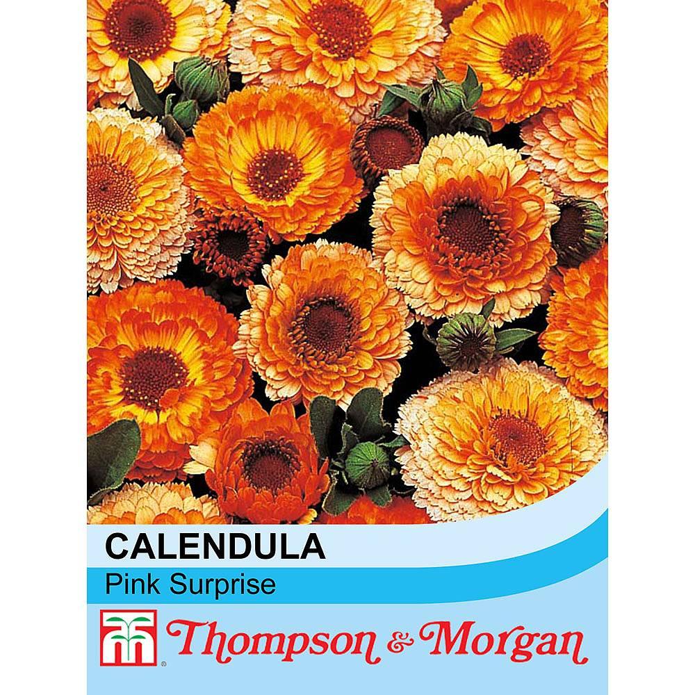 Calendula Officinalis Pink Surprise Seeds Thompson Morgan