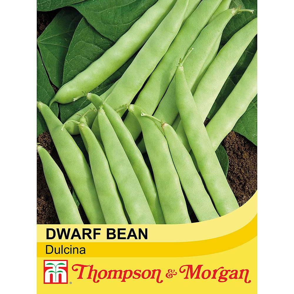 dwarf bean 39 dulcina 39 seeds thompson morgan. Black Bedroom Furniture Sets. Home Design Ideas