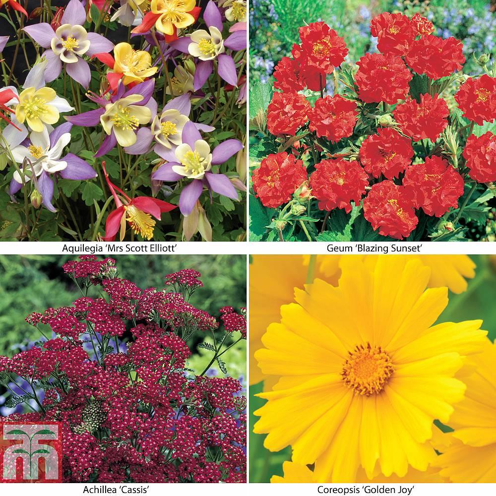 Perennial Collection Garden Ready Thompson Morgan