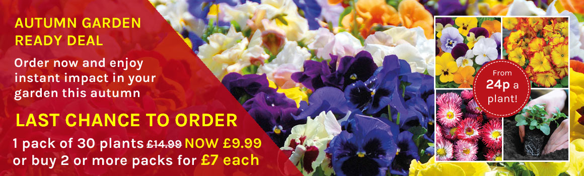 Autumn Garden Ready Deal