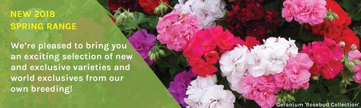 New 2018 Spring Range of plants and bulbs