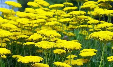 Top 10 Drought Tolerant Plants